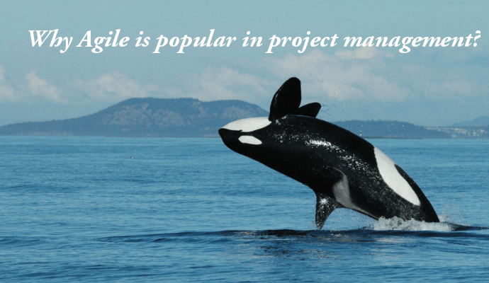 Why Agile is popular in project management?